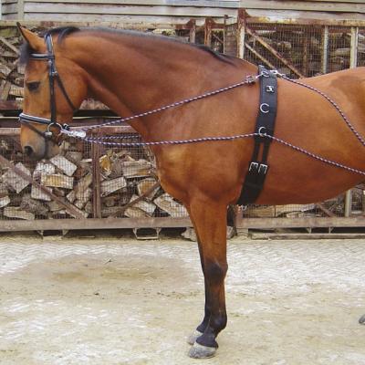 Aparelho Pessoa, Harry's Horse