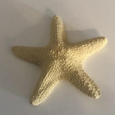 Estrela do Mar em gesso perfumado
