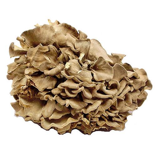 Cogumelos desidratados Grifola frondosa (Maitake)