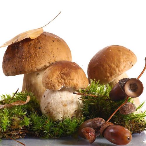 Cogumelo desidratado Boletus edulis (Míscaros)