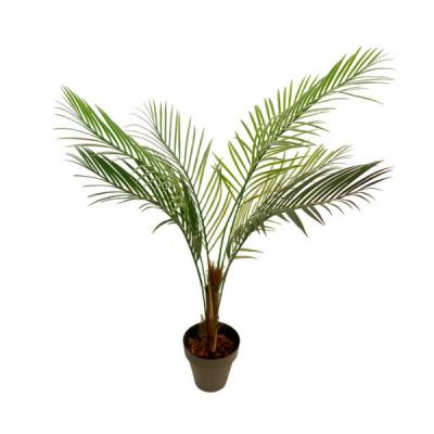 Palmeira Oasis