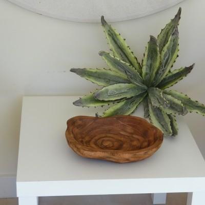 Cacto Aloe