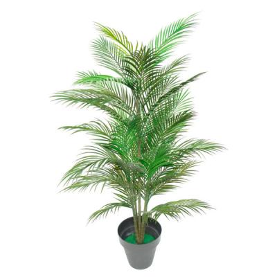Palmeira da Ásia