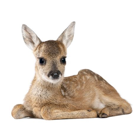 Sticker My Deer Lucy