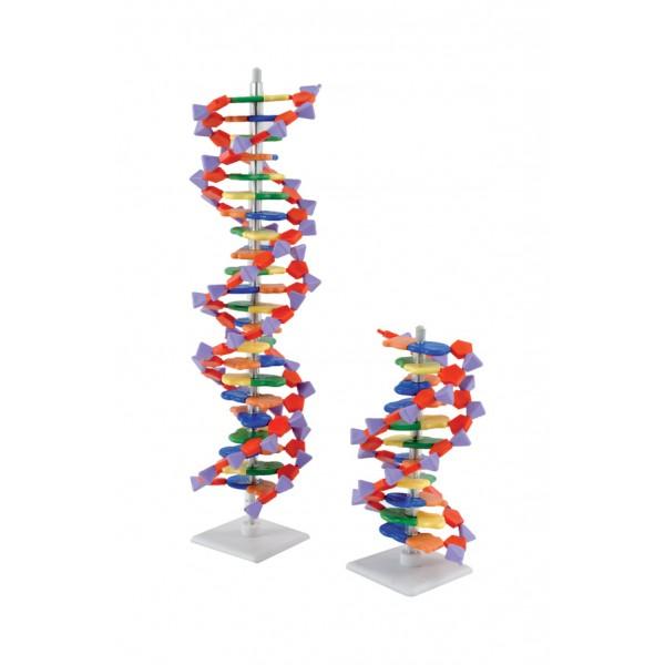 Molécula De Adn 22 Pdb