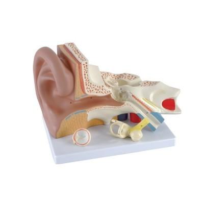 Modelo do Ouvido