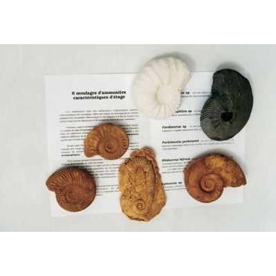 Conjunto de 6 Amonites