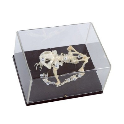 Esqueleto Animal Com Tampa Protetora - Sapo