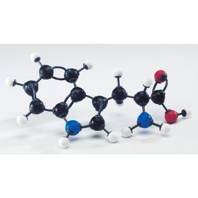 Modelo Molecular de Aminoácidos