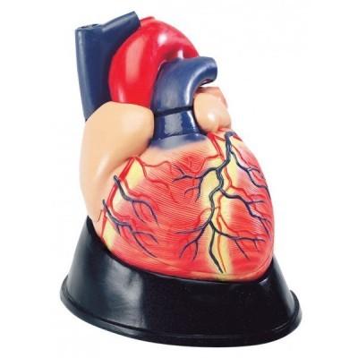 Modelo Coração Ampliação 4X