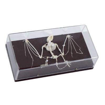 Esqueleto Animal Com Tampa Protetora - Passaro