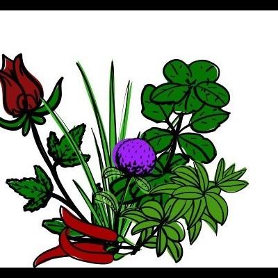 Plantas Aromáticas, Medicinais e Condimentares  - Granel