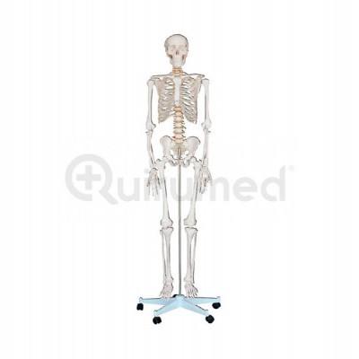 Esqueleto humano artificial 180 cm