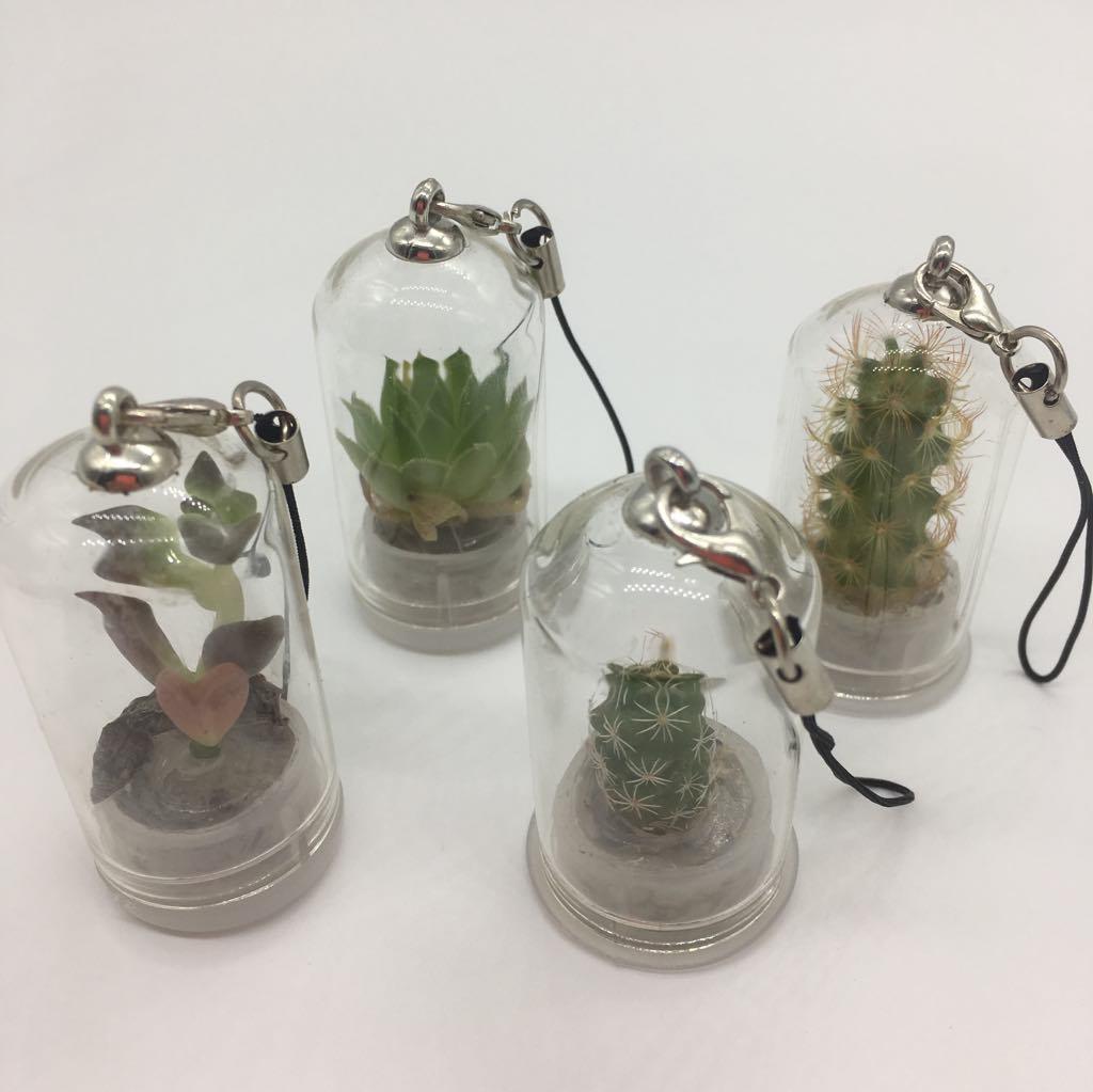 Planta de Estimação