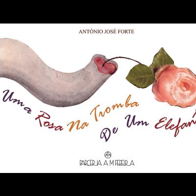 Uma rosa na tromba de um elefante