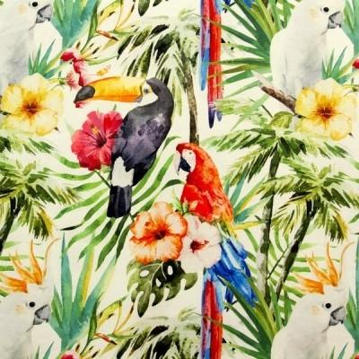 Half panamá - Tropical birds